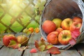 Apfel Heilkraft