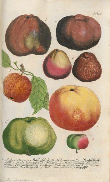 Viele Apfelsorten gibt es heute nicht mehr. Grafik: Johann Wilhelm Weinmann