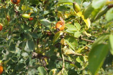 Immunabwehr durch Pflanzen