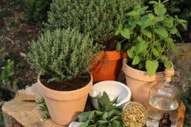 Hausapotheke mit fünf Pflanzen