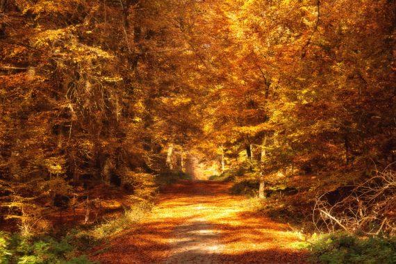 Den Herbst feiern