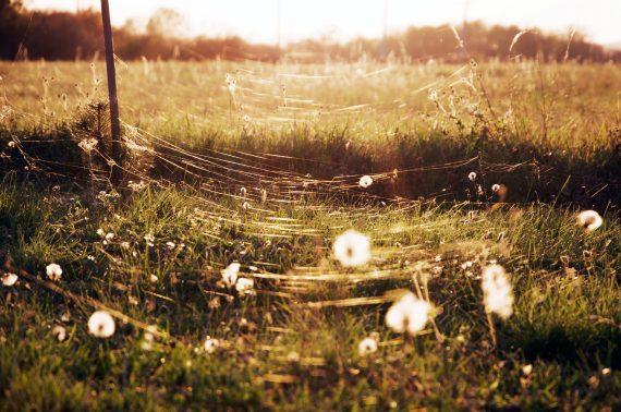 Altweibersommer Letzte sonnige Herbsttage