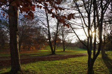 Ein Spaziergang im Herbstlicht tut uns gut