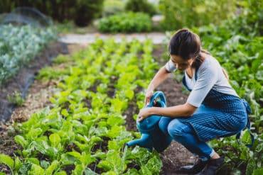 Garten-Tipp: Komposttee aktiviert den Boden