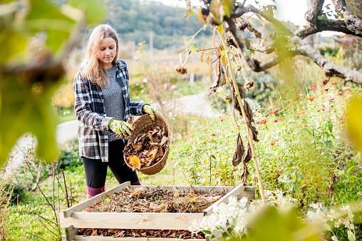 Herbstzeit im Garten heißt ernten und aufräumen